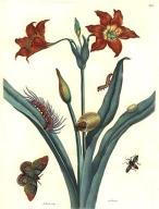 De_Europische_Insecten_Merian_Bernard