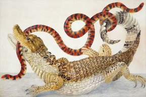 "Amazing Rare Things: The Art of Natural History in the Age of Discovery The Queen's Gallery, Palace of Holyroodhouse 2 March - 16 September 2007 Maria Sibylla Merian (1647-1717) Common or 'spectacled' caiman and South American false coral snake, c.1705-10 Credit line: The Royal Collection © 2006, Her Majesty Queen Elizabeth II This photograph is issued to end-user media only. It may be used ONCE only and ONLY to preview or review the exhibition ""Amazing Rare Things: The Art of Natural History in the Age of Discovery"". Photographs must not be archived or sold on. Contact: Public Relations and Marketing, the Royal Collection 020 7839 1377"