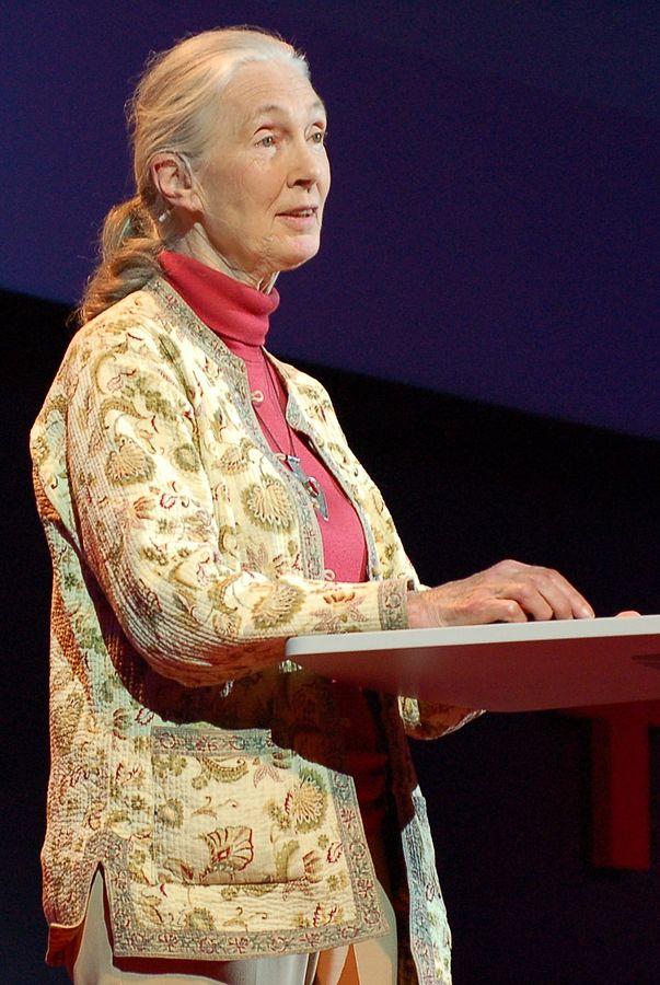 Cette photographie montre Jane Goodall devant un pupitre, en train de s'exprimer lors d'un TED Talk. Elle porte un haut rose et une veste à motif floral ; ses cheveux blancs sont noués en queue de cheval.