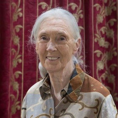 Cette photographie montre Jane Goodall. De face, elle sourit. Ses cheveux blancs sont retenus en queue de cheval.